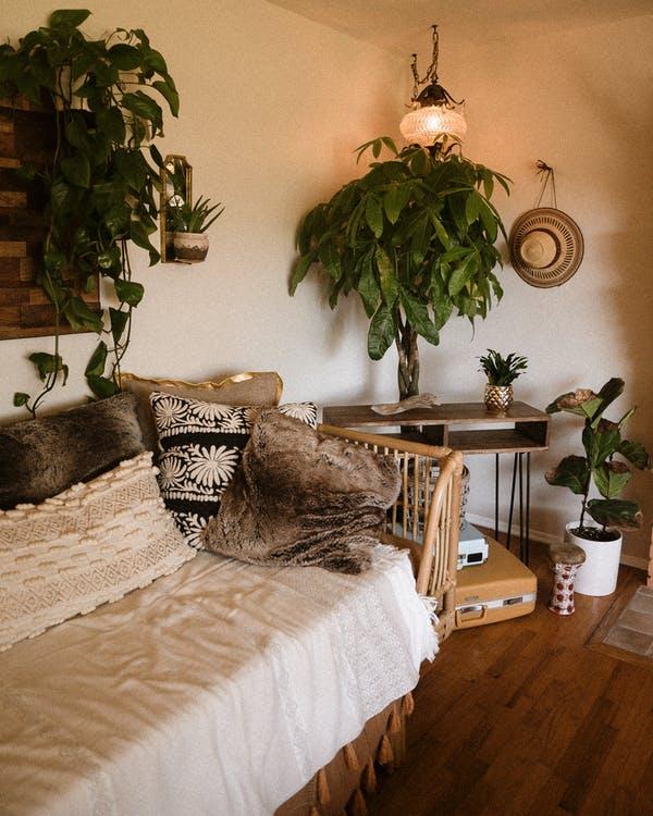 stue med trae og planter