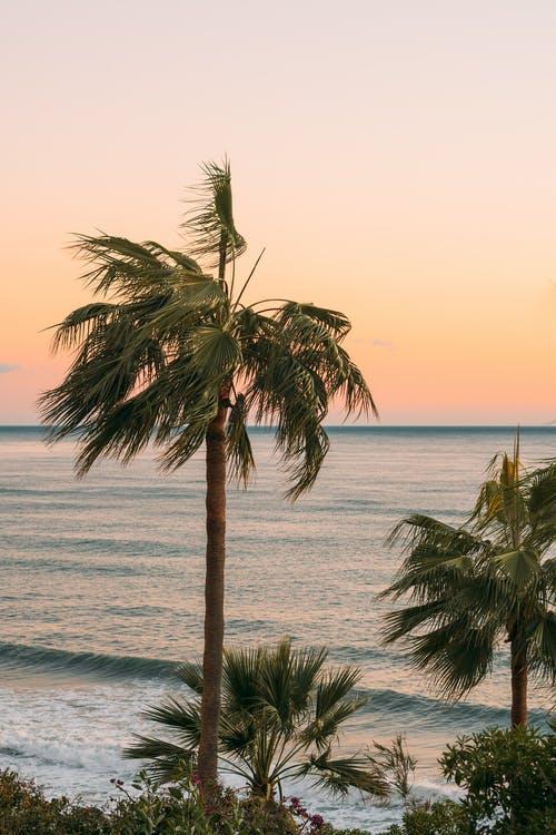 Californisk strand