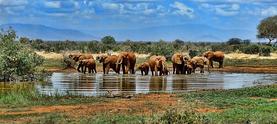 Elefanter der bader i Sydafrika