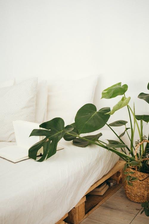 plante og seng lavet af paller